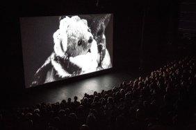 En projection – à Le Forum des images.